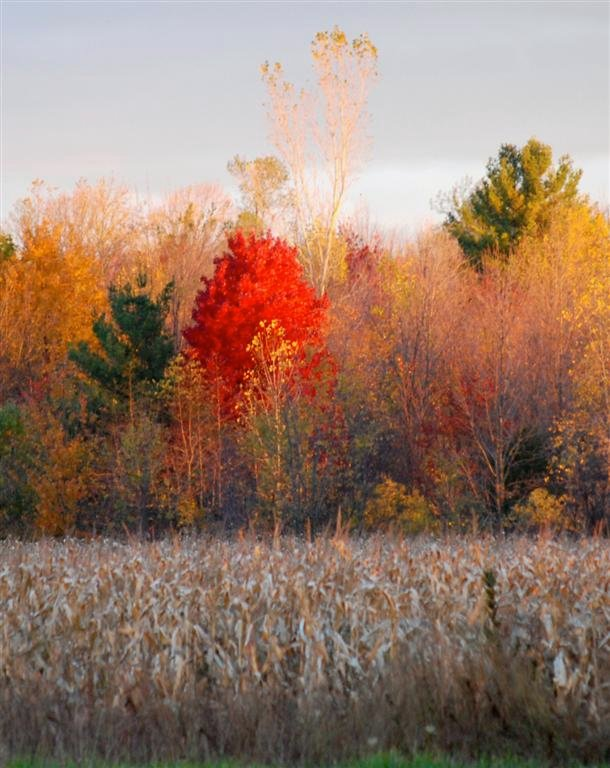 Images of Early Morning Fall Steps - #SC